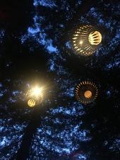 Sekvoiade pargis/ Redwoods Treewalk
